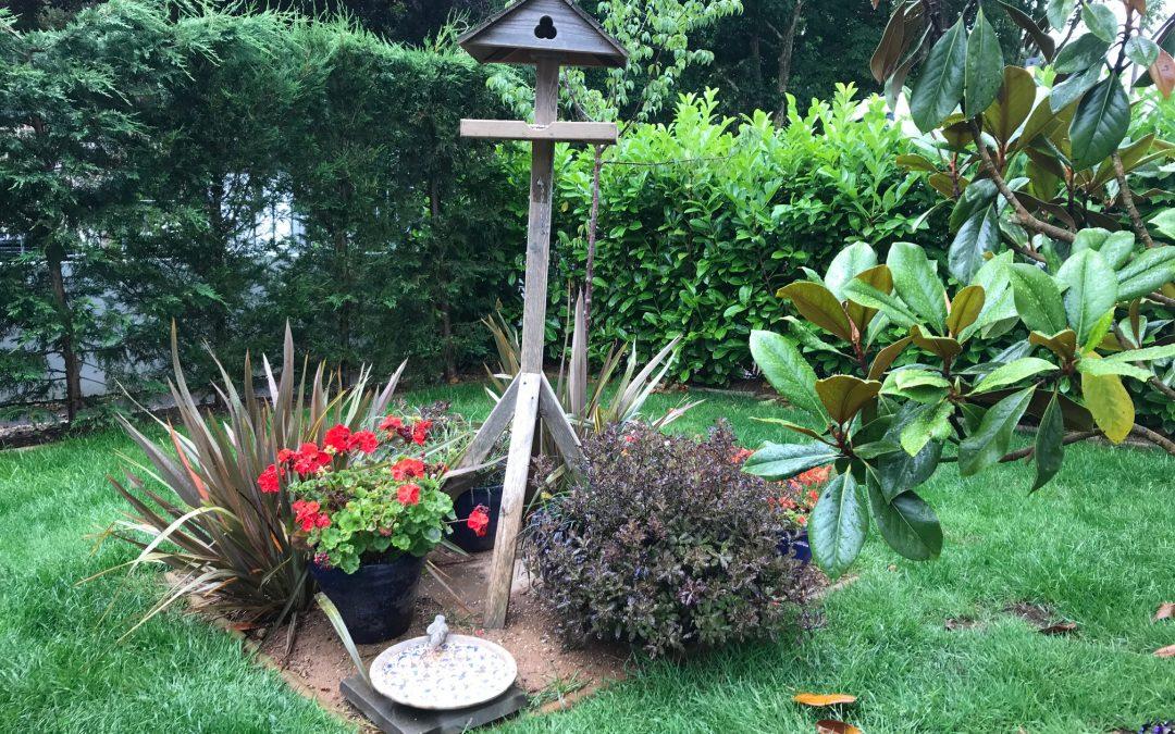Feeding garden birds is good for your wellbeing